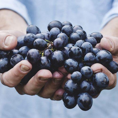 cabinet-recrutement-viticulture