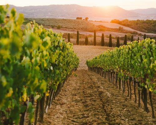 Beautiful sunset over vineyards.